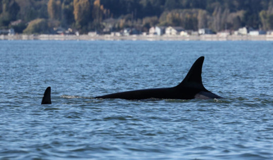 100+ year old Granny off Whidbey Oct. 11; J. Hein