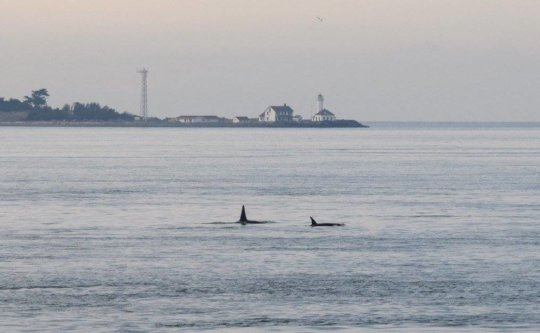 Residents in Admiralty Inlet by Marilyn Armbruster