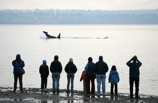 Land based orca watching, photo by Ray Pfortnor
