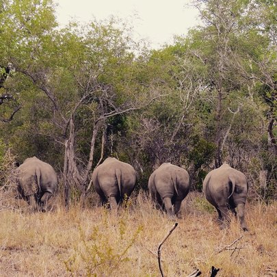 We quite like Rhino bums!