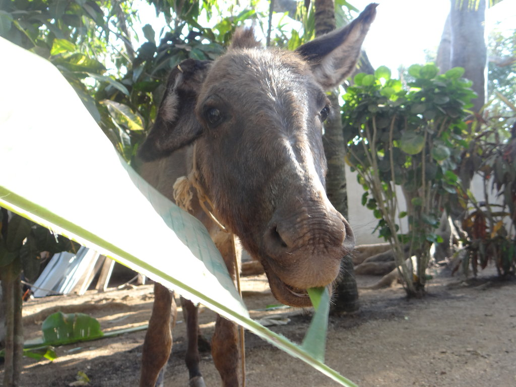 Build a Roof for 150 Animals in Cartagena Colombia