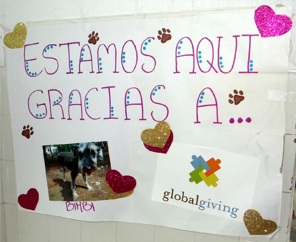 We are here thanks to Bimbi and Global Giving!