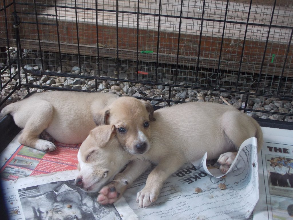 Reports on Protect dogs from malnutrition and disease in ...
