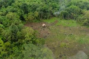 Illegal logging resulting in forest fragmentation