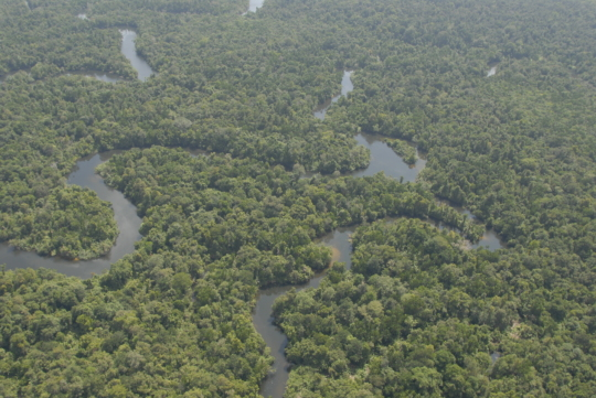 Healthy river and forest ecosystem