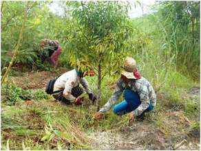 Sao has helped the project plant 733,000 trees