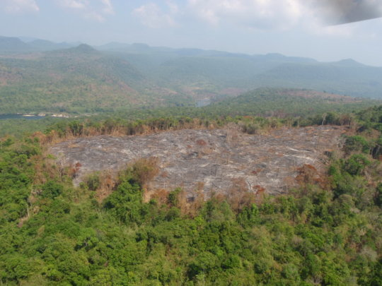 Habitat Loss from Slash and Burn Farming