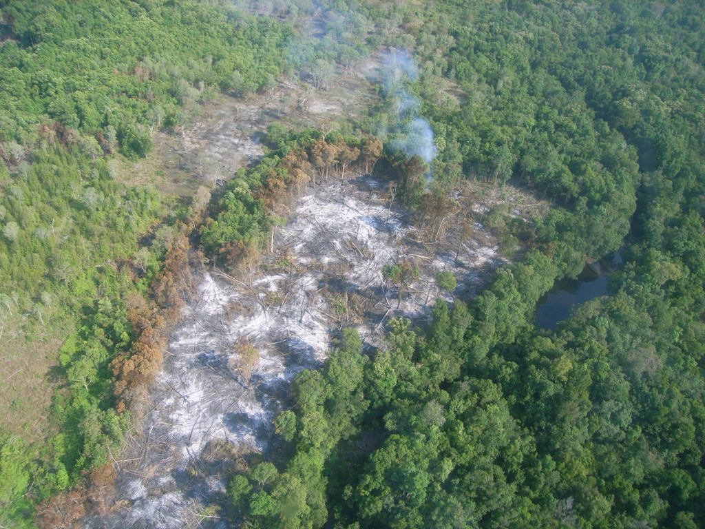 Aerial View of Forest Destruction