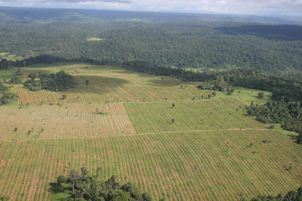 One of the reforestation sites.