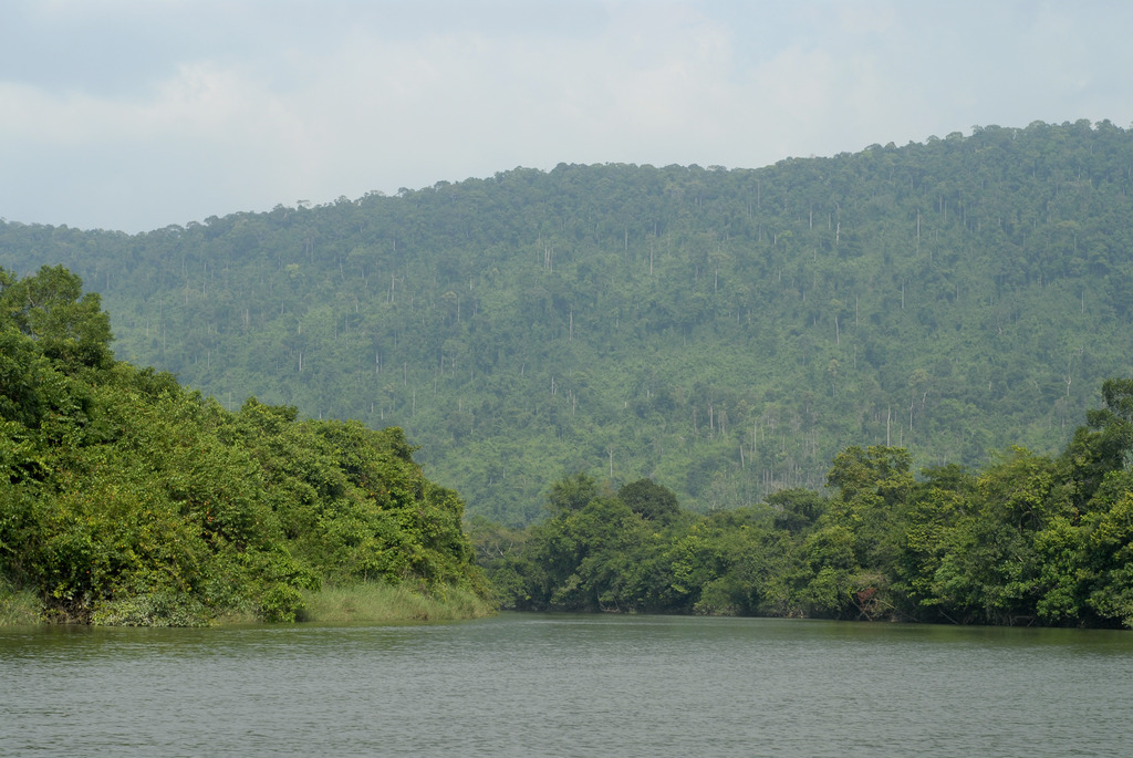 Southern Cardamom Forest