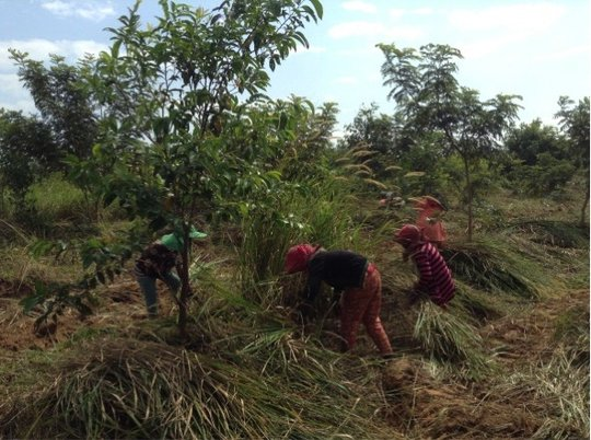 Maintaining Reforested Land