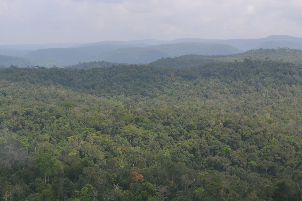 Plant a Rainforest in Southeast Asia