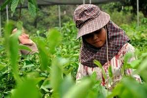 Providing Sustainable Livelihoods