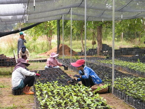 Seedlings Being Transferred from Greenhouse
