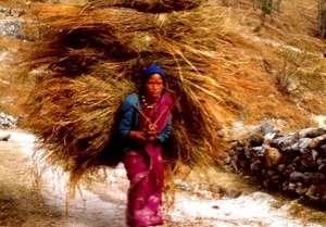 Women Fodder Load