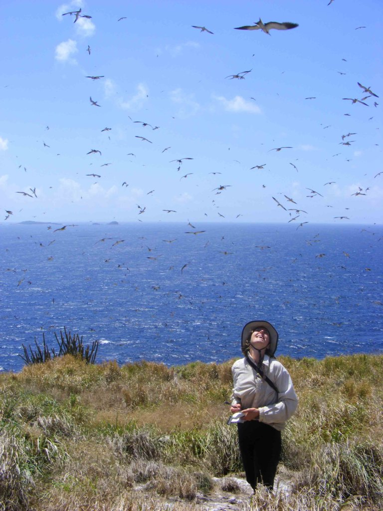 Amazed among thousands of nesting seabirds