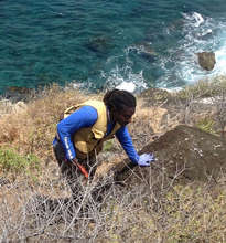 EPIC researcher Wayne Smart searching for nests.