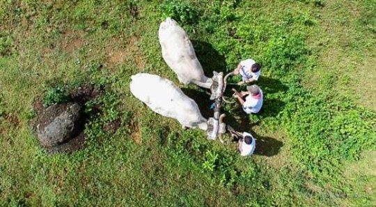 Ox cart at Santa Juana