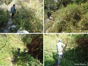 Cleaning of road-side bushes in village Naugaon