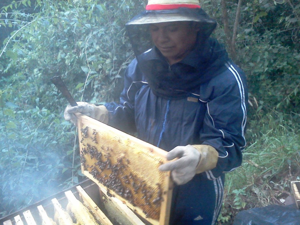 An Aj Tikonel Kab beekeeper opens up the hives