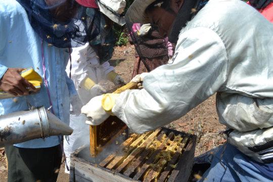 Genaro training beekeepers in Panimaquip