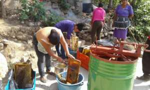 Las Diez Rosas collecting and processing honey