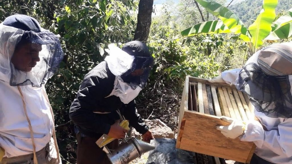 Genaro checks the hives as group members look on