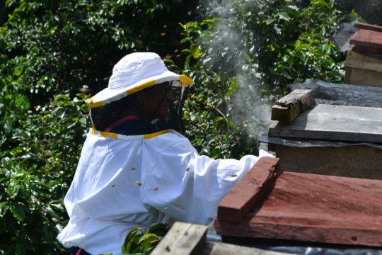 Beekeepers in Huehuetenango checking their hives
