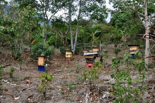 New bee hive boxes standing proudly in Panimaquip