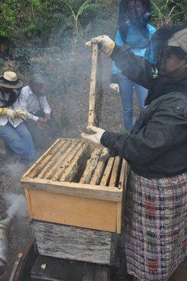Beekeepers working hard to retrieve honey
