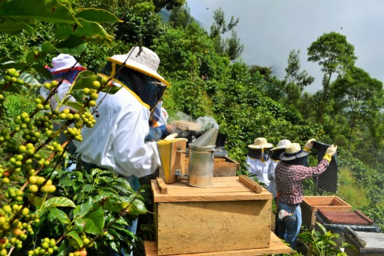 Fearless new beekeepers investigate the hives!