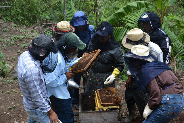 The Totolya group crowds around a hive