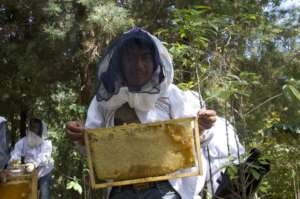 Juan holds a frame ready to be harvested