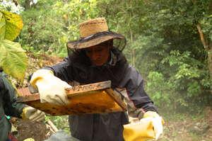 Empower Coffee Farming Families through Beekeeping