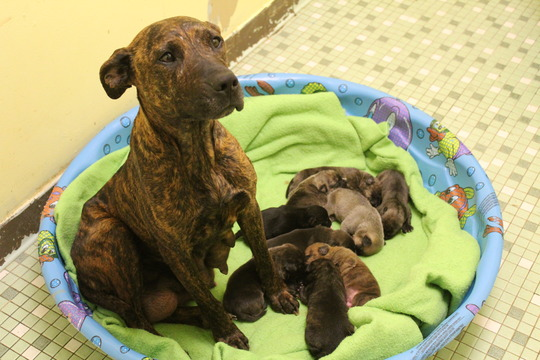 so many puppies for one sweet mama