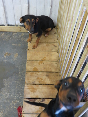 Momma and her last pup in their new pen