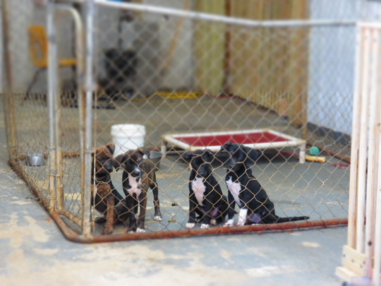 puppies so sweet, just waiting for their home