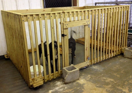 Puppies Love Our NEW Puppy Pens!