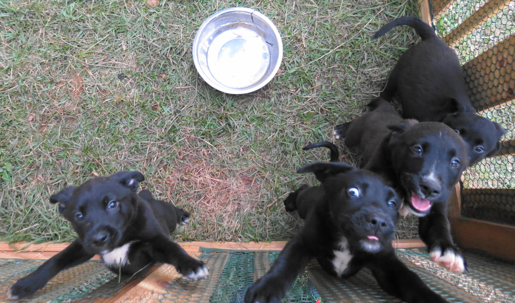 Puppies Jump for Joy in their Outdoor Play Yard