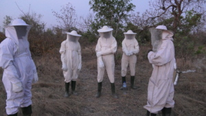 Team for harvesting the hives