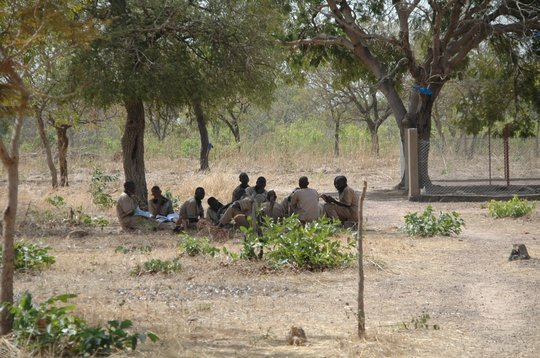 Students under a tree preparing their lessons.