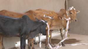 4 new cows just arrived