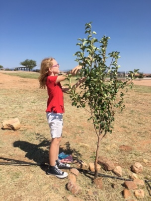 A student in Arizona checking her 1-year old tree