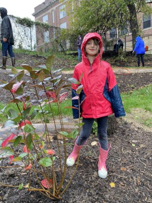Langley student with a newly planted aronia berry