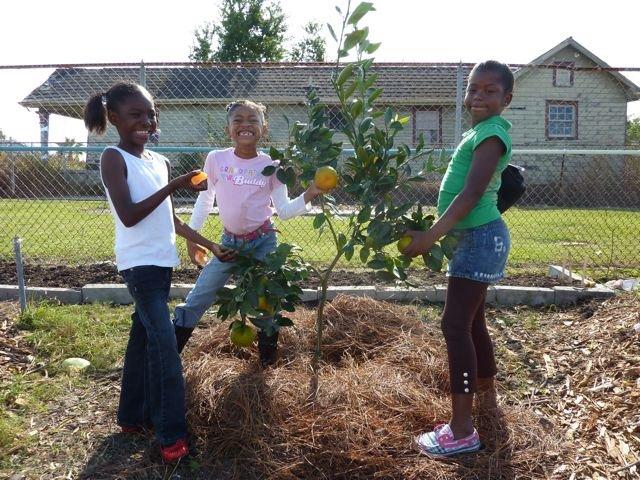 Fruit Tree 101