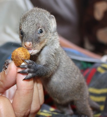 Feed our Mongoose Bandit for a whole year!