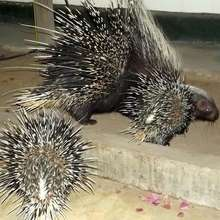 Spikey's special visit