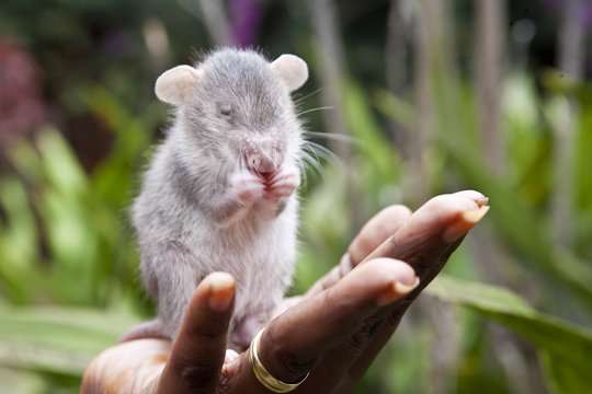 HeroRAT in training to find landmines