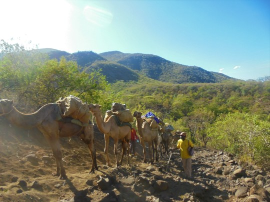 CHAT camel mobile clinic in a hard to reach area.