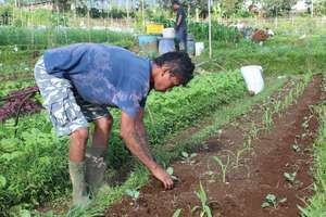 Planting hope for future